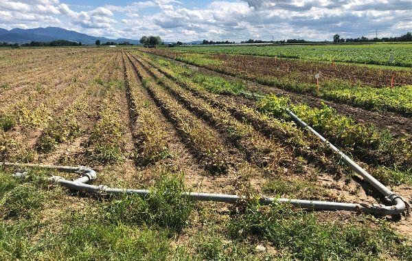 Trockenheit setzt den Landwirten im Südwesten zu