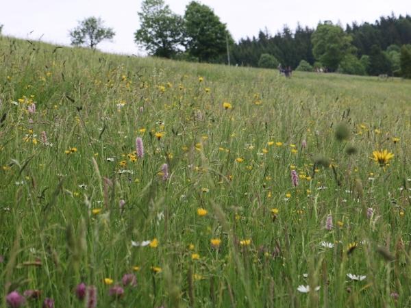 In Bad Dürrheim und den Teilorten findet aktiver Artenschutz in großem Stil statt