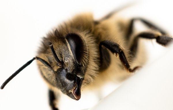 Alles pro Biene - Leitfragen für Landwirte
